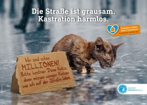 Kampagne_Katzenkastration bearb